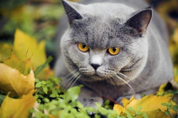 plantas-venenosas-para-tu-gato-que-no-debes-plantar-en-tu-jardin