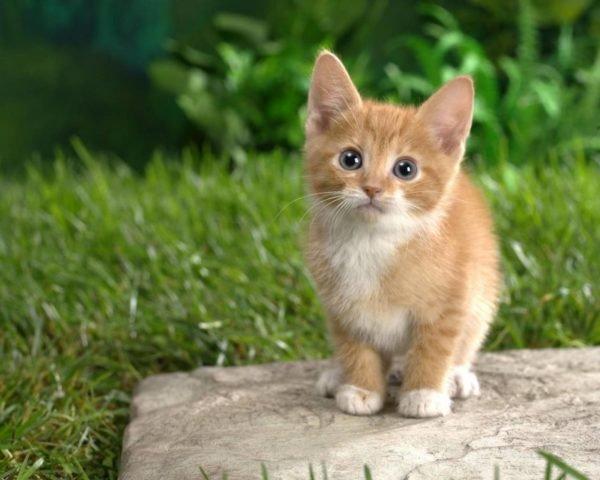 plantas-venenosas-para-tu-gato-que-no-debes-plantar-en-tu-jardin-gatito
