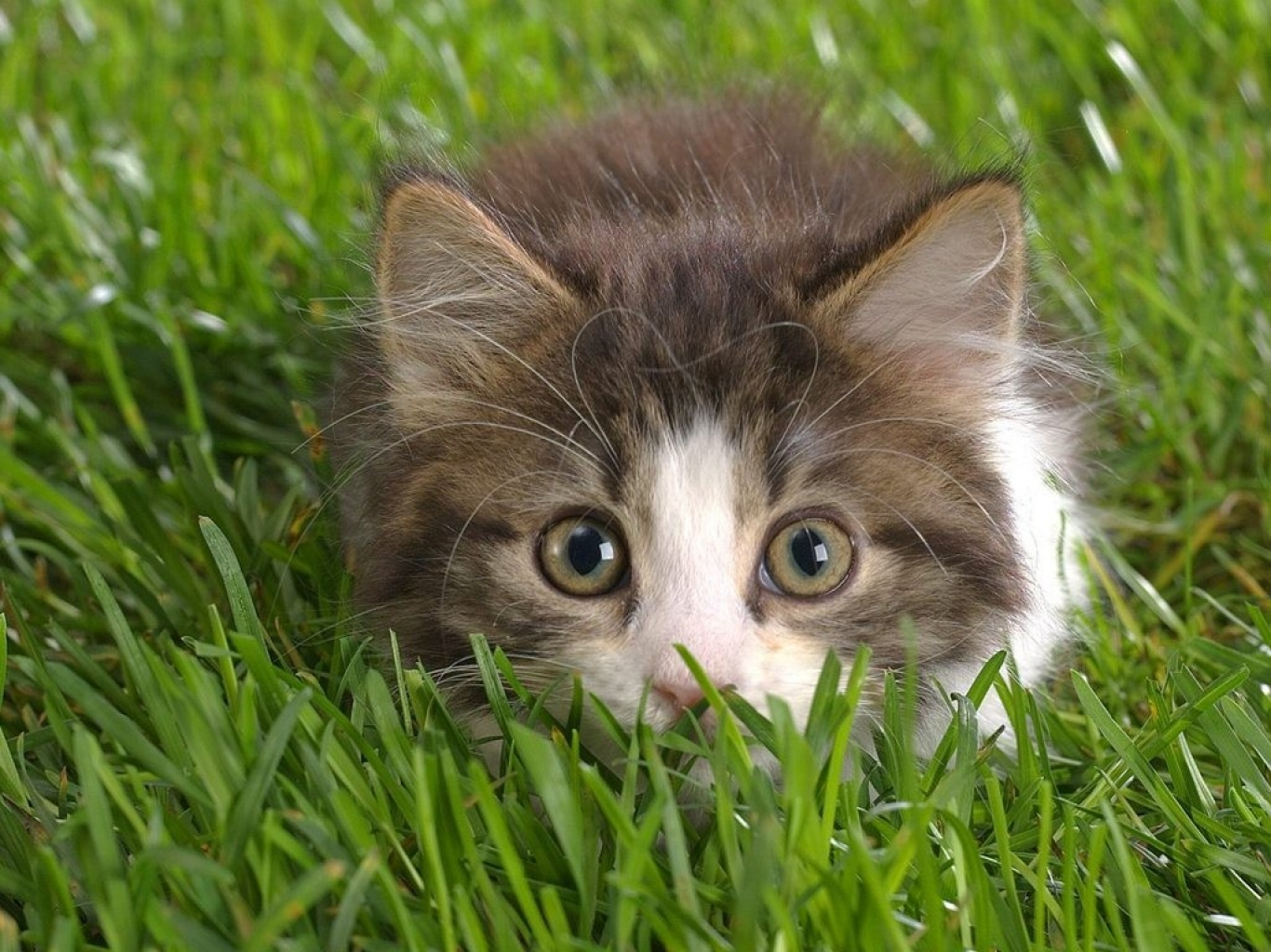 Plantas Venenosas Para Gatos Que No Debes Plantar En Tu