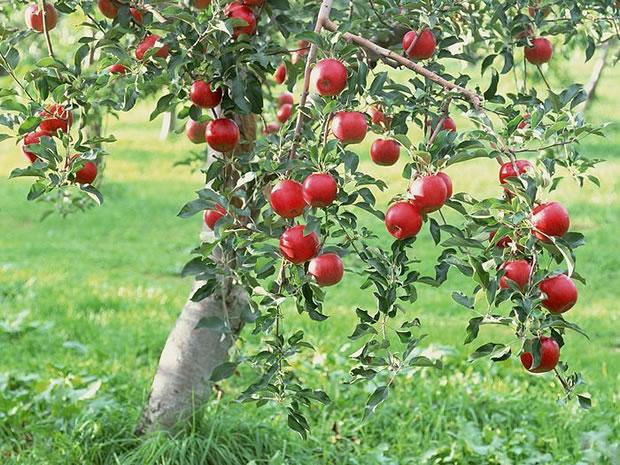 plantas-venenosas-para-tu-gato-que-no-debes-plantar-en-tu-jardin-manzano
